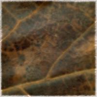 Autumnus #5