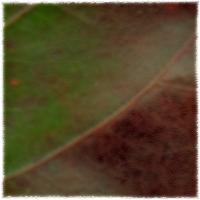 Autumnus #7
