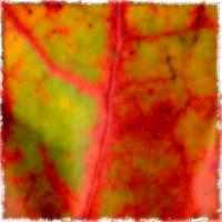 Autumnus #9