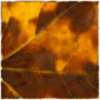 Autumnus #14