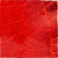 Autumnus #16